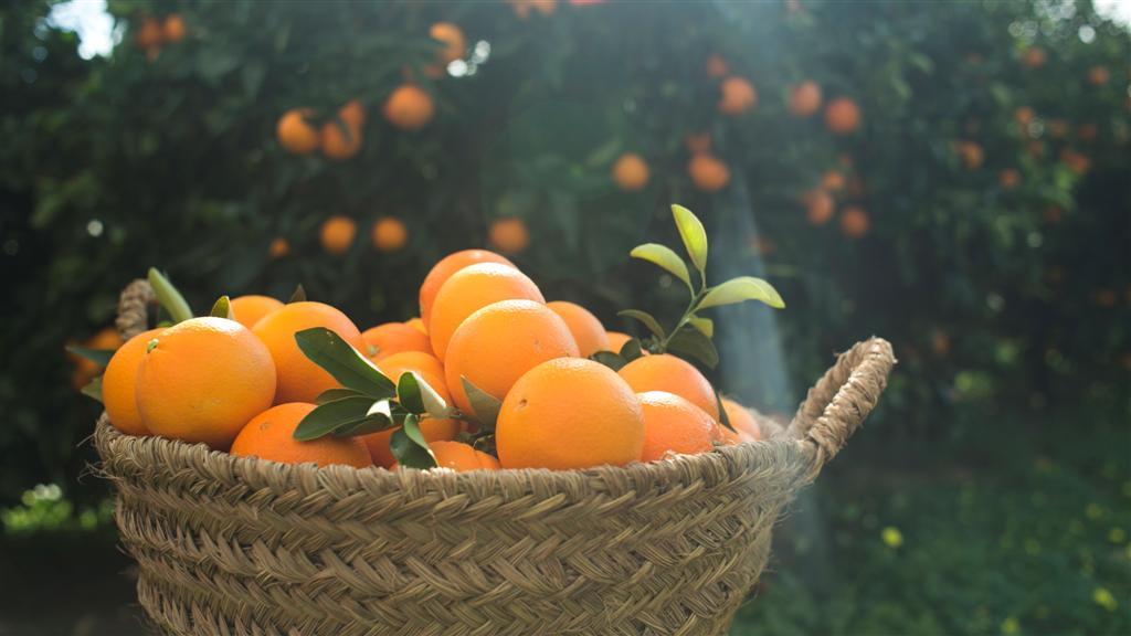 Oranges Quique