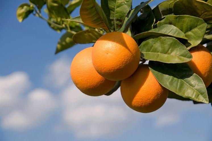 Organic oranges, rising