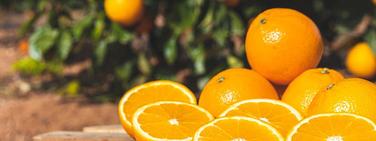 Information about the orange season