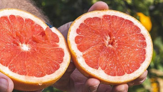 Season of the blood orange