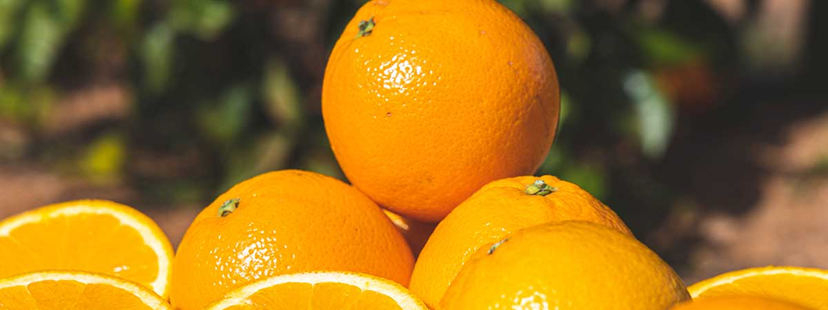 When to plant oranges