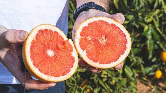 Welche Eigenschaften haben Grapefruits?